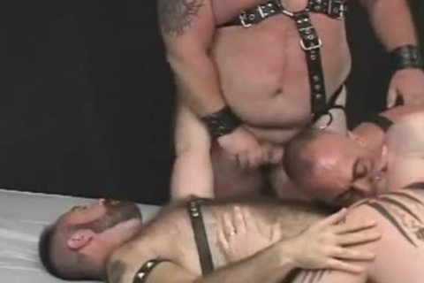 beautiful homosexual Bear Foursome Sex