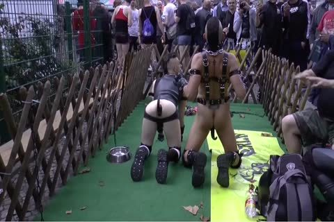 Folsom Berlin - serf And Doggyplay 2 From 2014